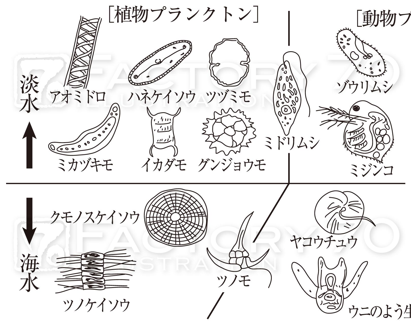 高校教科書(生物)挿絵/イラスト 制作例 窒素循環に関するイラスト 動物プランクトン/植物プランクトンのイラスト