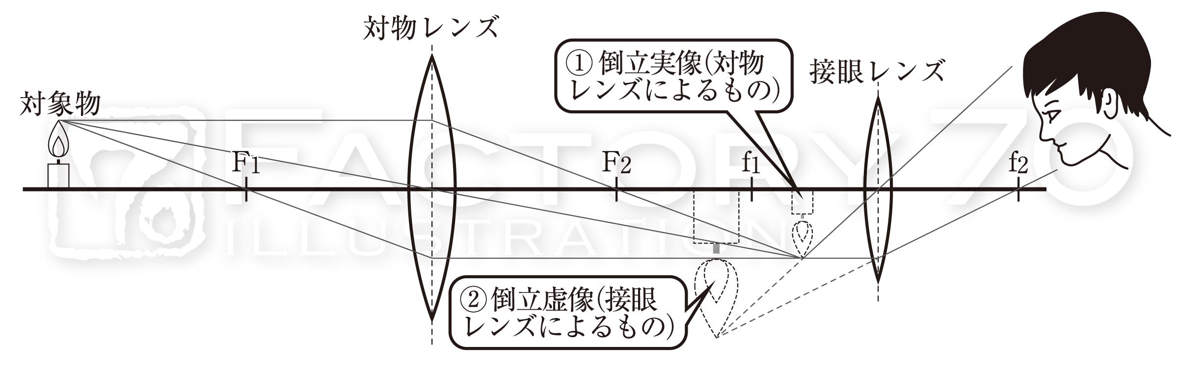 高校教科書(生物)挿絵/イラスト 制作例 レンズの構造に関するイラスト