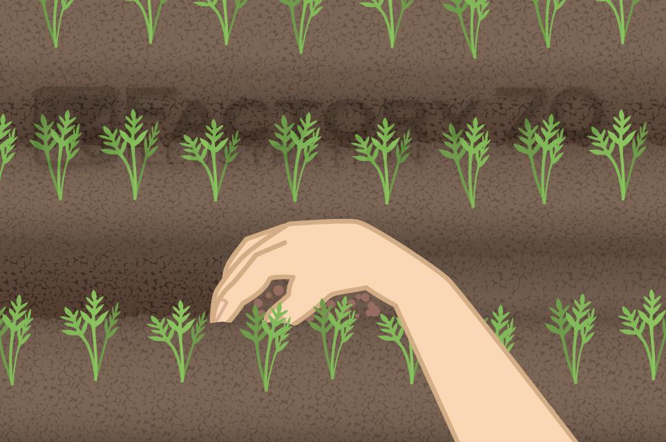 農業・家庭菜園の雑誌イラスト制作例 学研プラス「野菜だより」