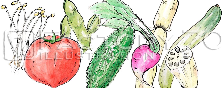 書籍イラスト制作例 食材のイラスト 水彩手描きイラスト 日本の野菜