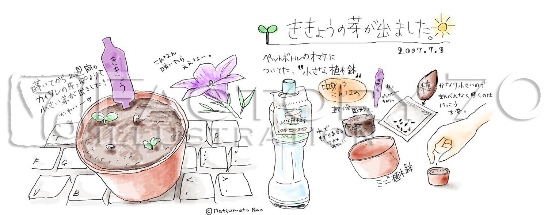 イラスト制作例 絵日記ルポ-花を育てる
