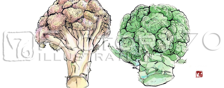 イラスト制作例 野菜のイラスト-ブロッコリーとカリフラワー