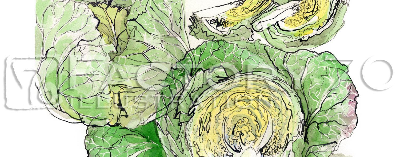 イラスト制作例 野菜のイラスト-キャベツ